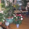 Huis 02-08-08 bloemen voor ... - In huis 2008