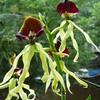 P1120371 - orchideëen
