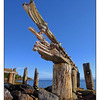 Union Bay Wharf 1 - Comox Valley